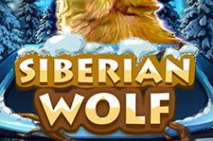Играть в Siberian Wolf